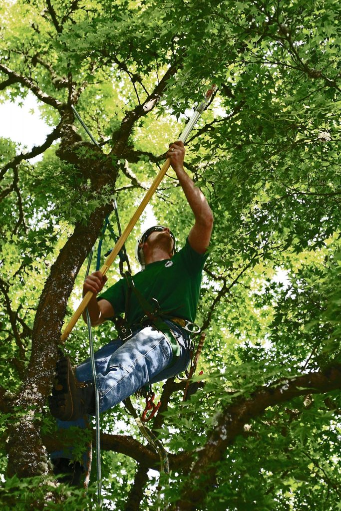 Rich's offers professional tree pruning services for trees of all sorts