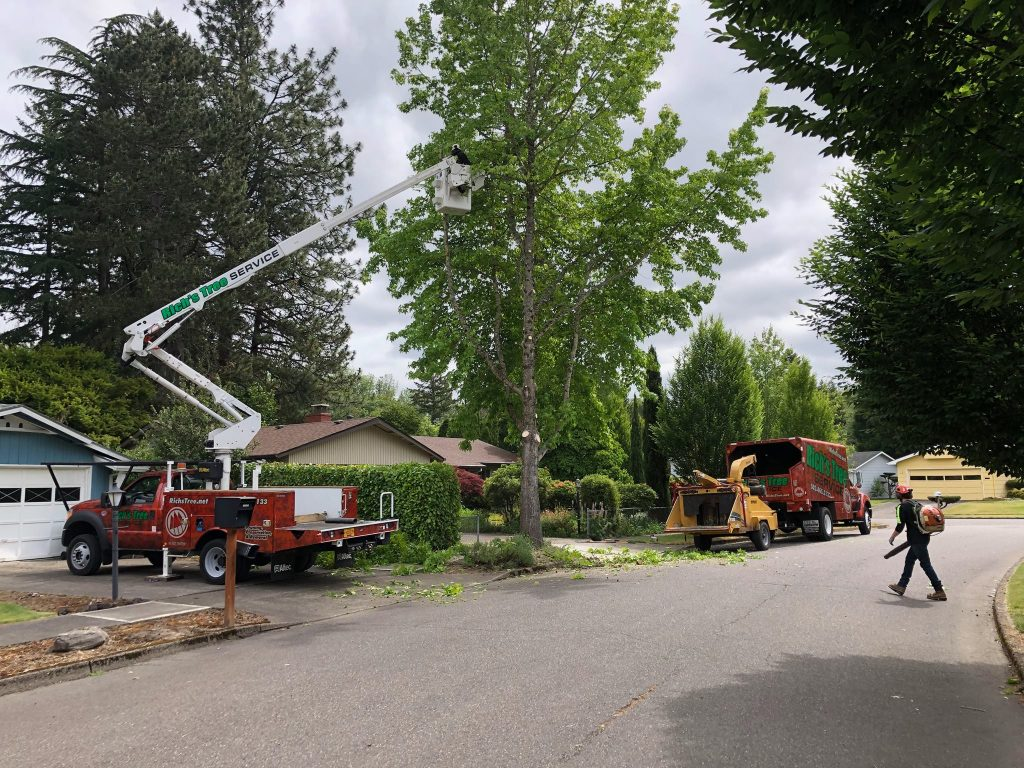 Rich's Tree Service can remove, trim, and replace trees in Oregon & SW Washington