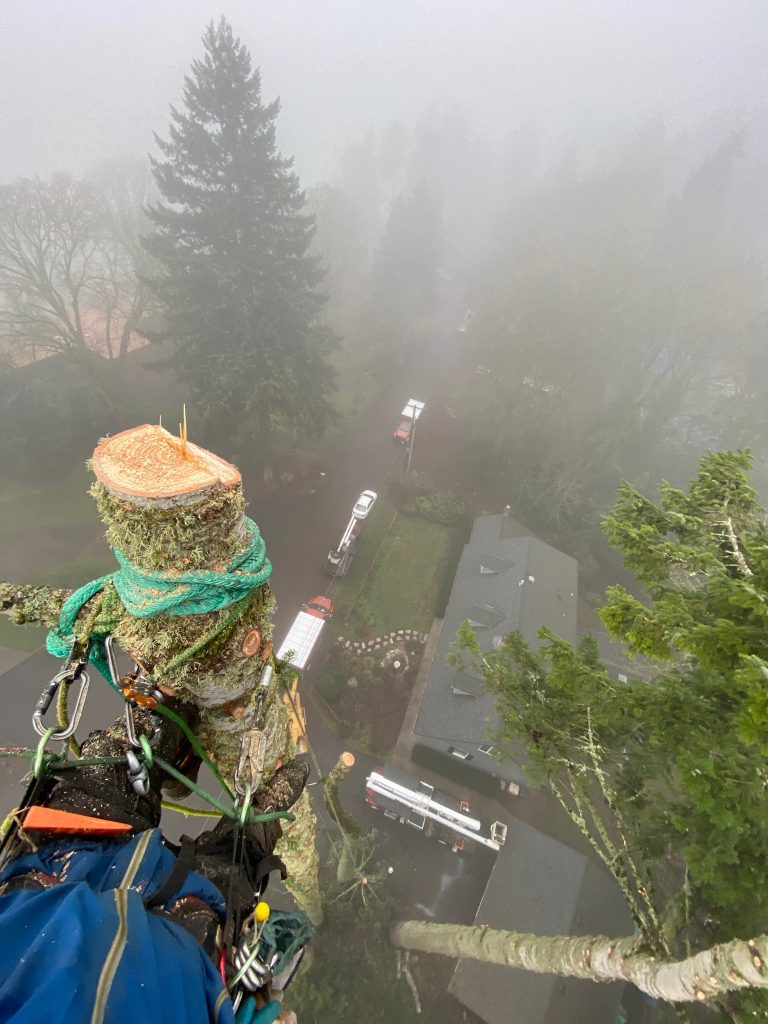 A member of our Beaverton tree service at work - we are arborists for Beaverton