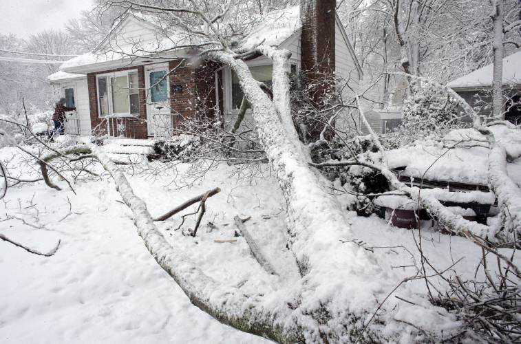 Our team of tree removal experts will quickly remove downed trees which create an emergency situation for homeowners
