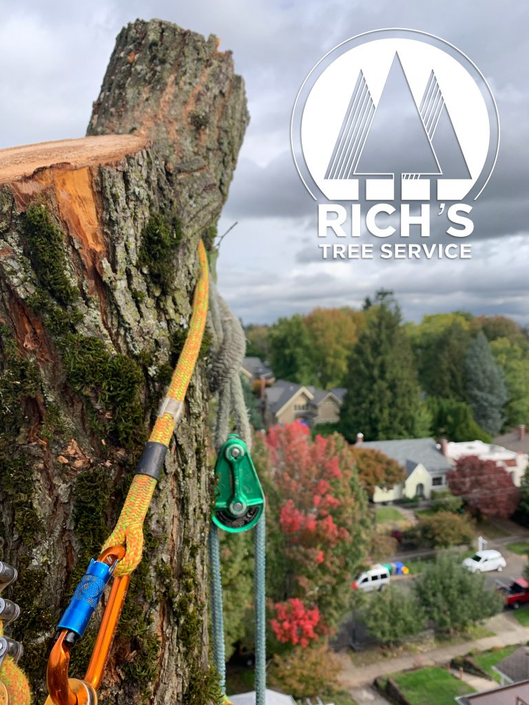 Rich's Tree Service provides tree care from professional arborists